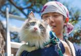 «Кот на час» – популярная услуга в японском отеле