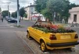 В Брест вернулся «цветочный Фольксваген»