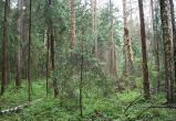На Брестчине собираются снять запрет на посещение лесов