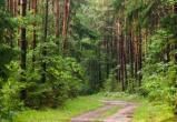 В 2-х районах Брестчины сняли запрет на посещение лесов