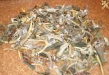 Брестские таможенники нашли тайник с оленьими рогами