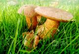 10 правил сбора грибов