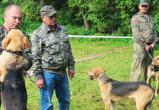 В Бресте прошла межрайонная выставка охотничьих собак