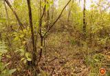 В Столинском районе нашли труп мужчины, предположительно пропавшего шесть лет назад