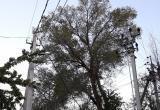 Куда звонить в Бресте, если нужно убрать, спилить или обрезать опасное дерево?