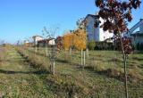 Аллеи из тысячи деревьев появились в предместье Стимово