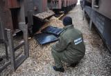 Польские пограничники обнаружили контрабанду в товарняке, ехавшем из Бреста (фото)