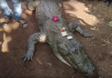 130-летнего крокодила хоронило 500 человек