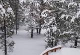 Снегопад в Аризоне бьёт рекорд 1915 года