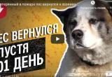 Потерянный при пожаре пес вернулся к хозяевам через 101 день (видео)