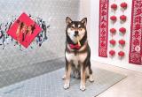 В Канаде рисунки собаки продали за 5 тысяч долларов: курьезные фото