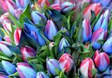 Тюльпаны: много тюльпанов! Восхитительная подборка к 8 Марта