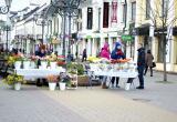 Тюльпанная лихорадка в Бресте. Фоторепортаж