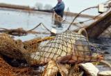 С 20 марта по 18 мая вводится запрет на лов рака и всех видов рыбы в Брестской области