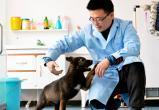 Первую клонированную полицейскую собаку дрессируют в Китае