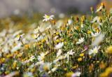 Тест от Mediabrest: узнай цветок по фото