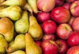 Белорусские яблоки и груши запретили ввозить в Россию