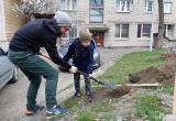 В центре Бреста посадили сакуру и другие южные растения