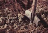 Женщина родила ребенка и закопала его в Барановичах