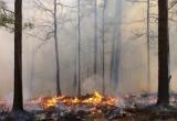 Когда снимут запрет на посещение лесов и сколько человек уже его нарушили