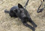 Жителя Ружан, жестоко избившего собаку, оштрафуют