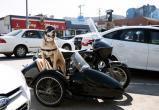 Пес-мотоциклист путешествует по США (видео)
