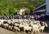 Баранов и овец зачислили во французскую школу