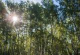 В Бресте все еще действует запрет на посещение лесов. Какой грозит штраф за нарушение?