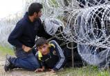 Иракцы пытались нелегально пробраться из Беларуси в Польшу