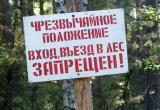 На Брестчине могут опять запретить посещать леса