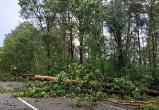 Фотофакт: трассу Брест-Пружаны завалило деревьями