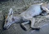 На Украине убили чупакабру (видео)