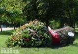 Фестиваль цветов пройдет в Бресте