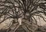 Деревья умеют спать