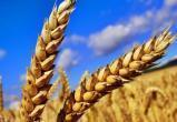 Миллион тонн зерна намолотили в Брестской области