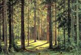 Минчанка с тремя детьми заблудилась в лесу в Дрогичинском районе