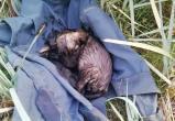 В Волковыске спасли щенка, который полностью был покрыт смолой