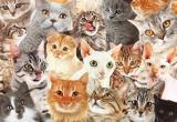 Тест от MediaBrest ко Всемирному дню кошек