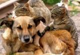 Всемирный день бездомных животных отмечается 17 августа