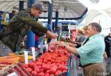 Час расплаты за томаты: почему фермеры Брестчины не могут реализовать товар