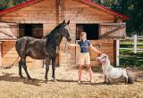 Самого маленького в мире коня нашли в Польше (видео)