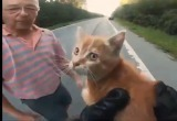 Спасение милого котенка попало на видео