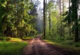 Угонщики бросили машину с 10-летним ребенком в лесу