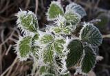 Первые заморозки в Беларуси ожидаются в ночь 23 сентября