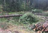 Два человека погибли во время валки леса под Минском