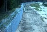 Заяц и рысь прорвались через белорусско-литовскую границу (видео)