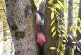 Второклассница застряла на дереве в Костюковичах
