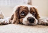 Как воспитывать собаку?