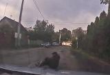 В Бресте мужчина отдыхал на дороге под присмотром собаки (видео)