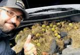 Белки в США заполнили машину сотнями орехов
